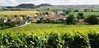 Massigny and its vineyards